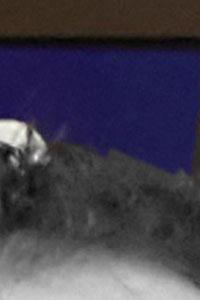 Detalle de la foto procesada